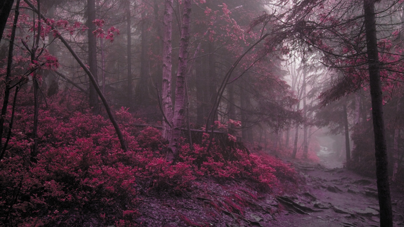 wood_fog_lilac_grass_trees_mysterious_60681_1366x768